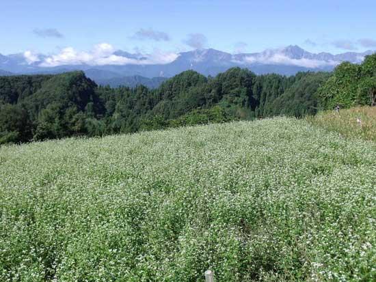 長野県上水内郡中条村を拠点に無農薬・無化学肥料栽培に取り組んでいる有限会社「まごころふれあい農園」